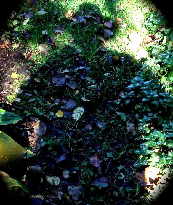 The gardener's shadow is omnipresent. Photo: S. Marshall