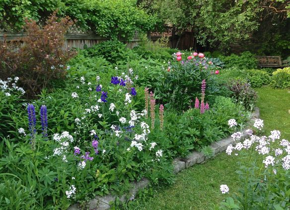 Early June Border Shows Lots of colour            Photo: S. Marshall