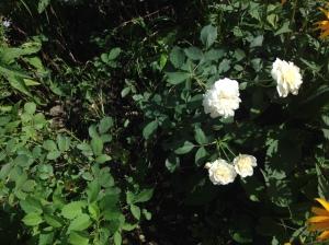 peace-garden-2